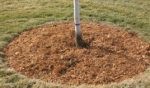 "Too ""Mulch"" of a Good Thing Can Be Harmful to Your Trees"