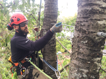Tree Preservation The How S And Why S Of Cabling