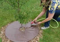 Tree Water Bags