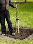 Why plant trees in square holes