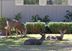 17 tips for protecting your trees and plants from deer