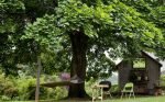 7 fast-growing shade trees to slash your Hydro bill
