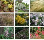 Find native trees and plants for your yard