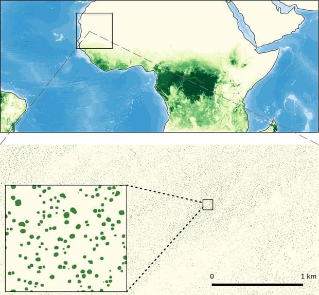 sahara trees